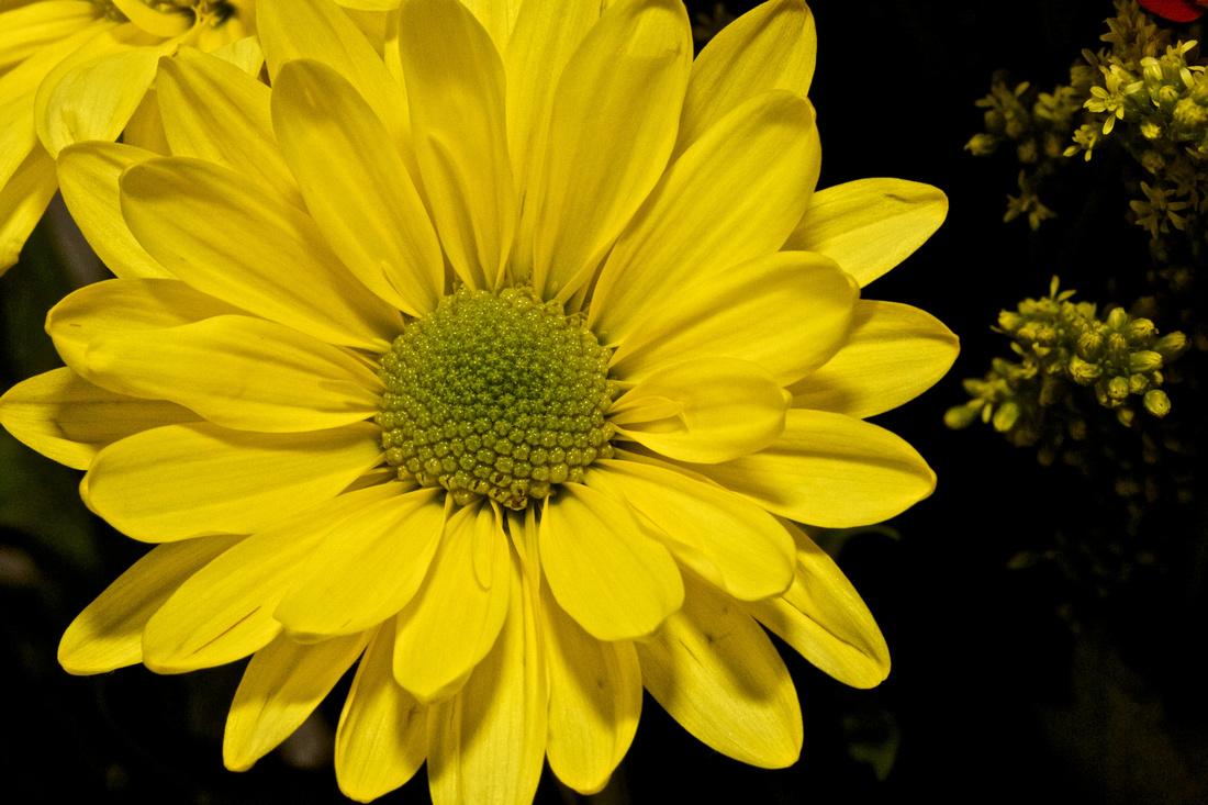 Andrea's Flowers, Herndon, VA