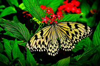 2015 Jan - Magic Wings Butterfly Conservatory
