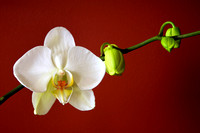 2012 May - Andrea's Orchid