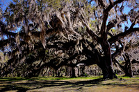 2017 March - St. Simons, Jekyll, & Sapelo Islands, GA